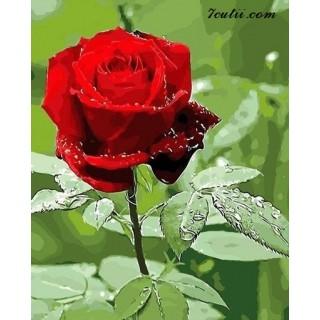 Pictura pe numere -Trandafir, frumos ca tine