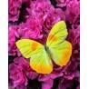 Pictura pe numere - Fluturele galben si florile violet