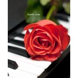 Pictura pe numere - Trandafir si muzica