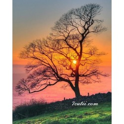 Pictura pe numere - Copacul si culorile vietii