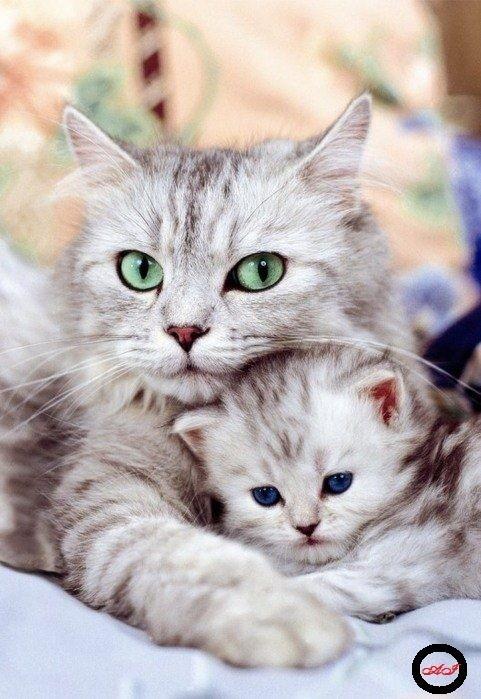 Goblen de diamante - Pisicuta in bratele mamei sale: Dimensiuni si tip - 29x20 cm Margele Rotunde
