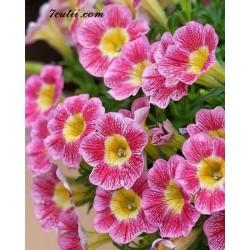 Pictura pe numere - Flori roz pentru tine