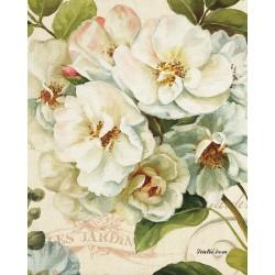 Pictura pe numere - Trandafiri albi si frumosi