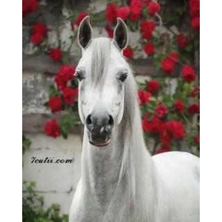 Pictura pe numere - Calul alb si florile rosii