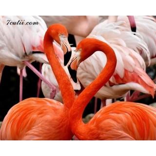 Pictura pe numere - Flamingo-uri americane