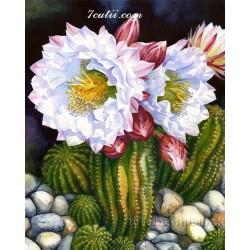 Pictura pe numere - Cactus inflorit