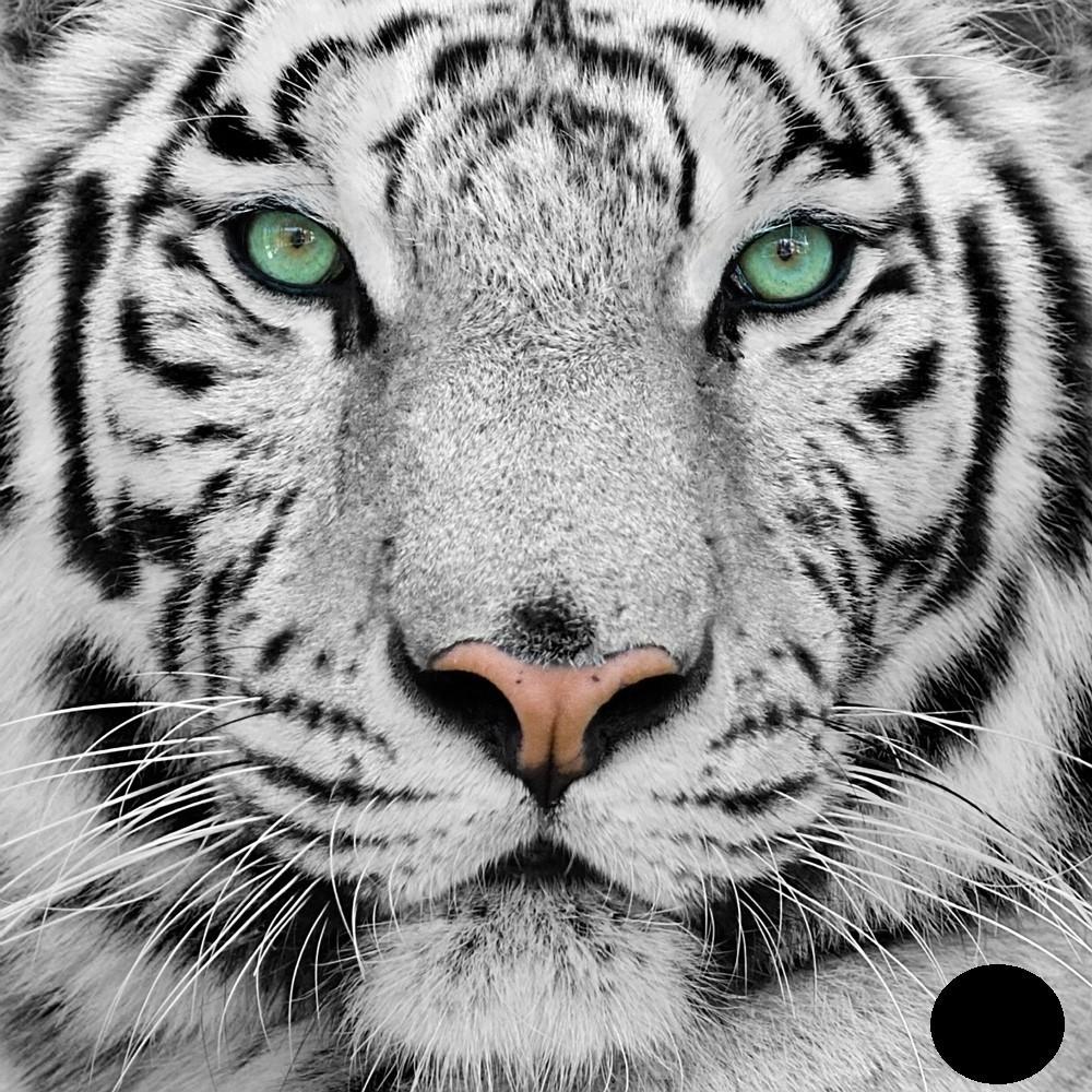 Goblen de diamante - Ochi de Tigru: Dimensiuni si tip - 50x50 cm Margele Rotunde (Circulare)