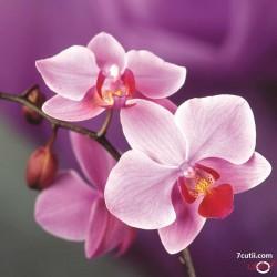 Goblen de diamante - Orhideea Roz