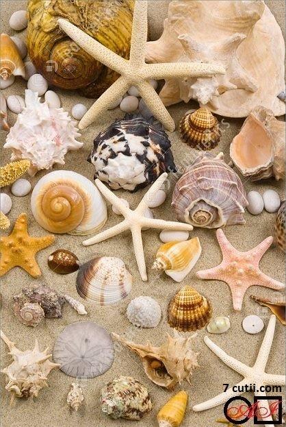 Goblen de diamante - Darurile oceanului: Dimensiuni si tip - 30x20 cm Margele Patrate