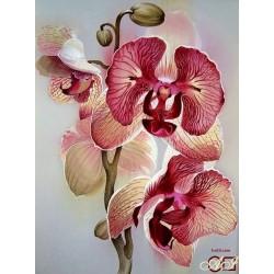 Goblen de diamante - Orchidea Delicata