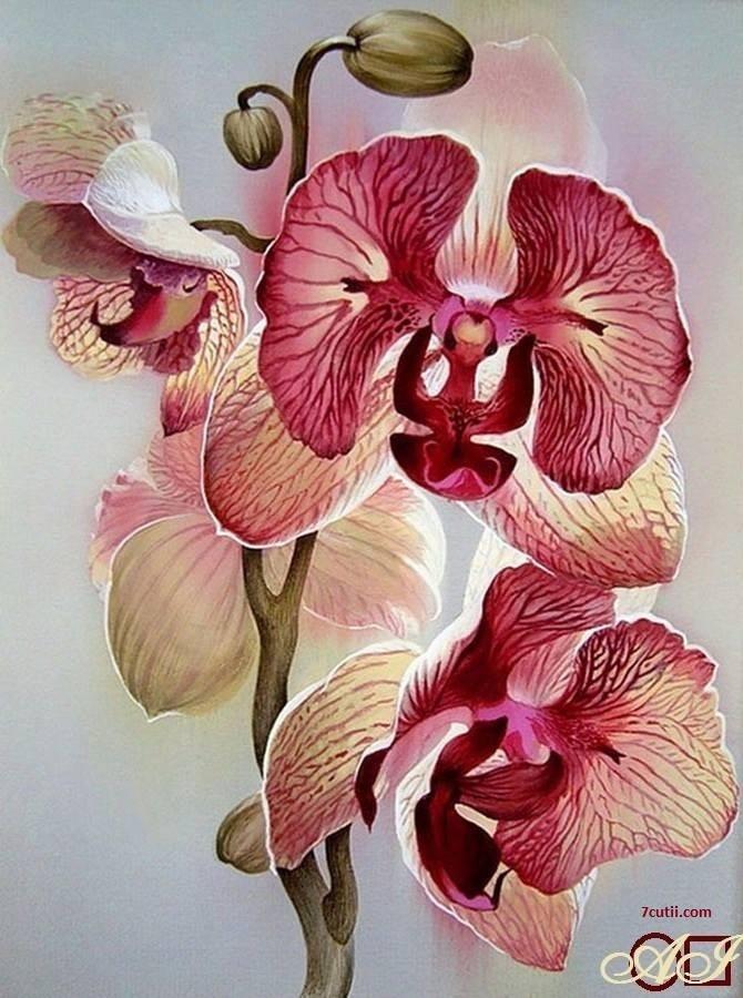 Goblen de diamante - Orchidea Delicata: Dimensiuni si tip - 32x24 cm Margele Rotunde (Circulare)