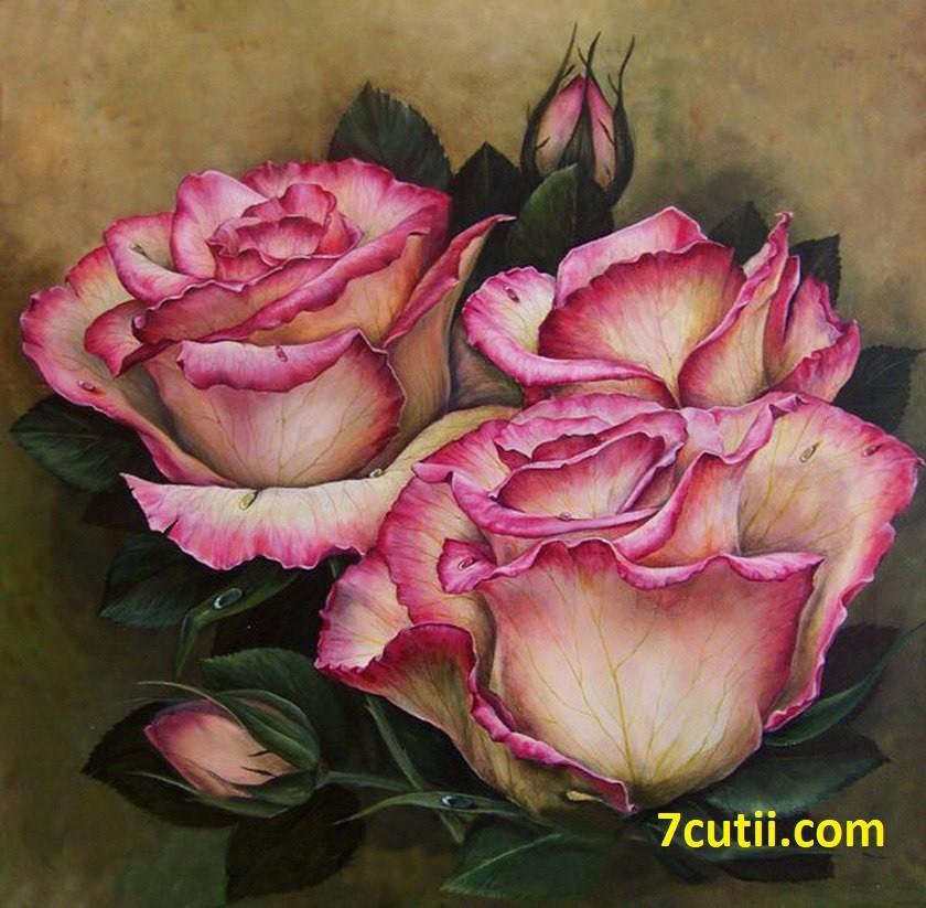 Goblen de diamante -  Trandafiri aromatici: Dimensiuni si tip - 40x40 cm Margele Rotunde (Circulare)