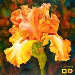 Goblen de diamante -  Iris galben
