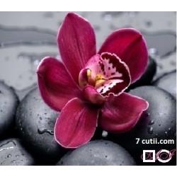 Goblen de diamante - Orhideea mov
