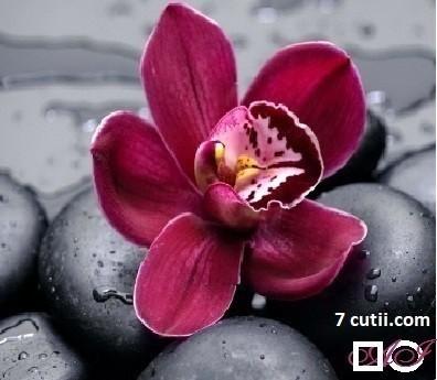 Goblen de diamante - Orhideea mov: Dimensiuni si tip - 30x30 cm Margele Rotunde (Circulare)