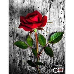 Goblen de diamante - Un trandafir pentru tine !