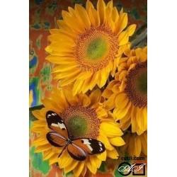 Goblen de diamante - Floarea soarelui si fluturele