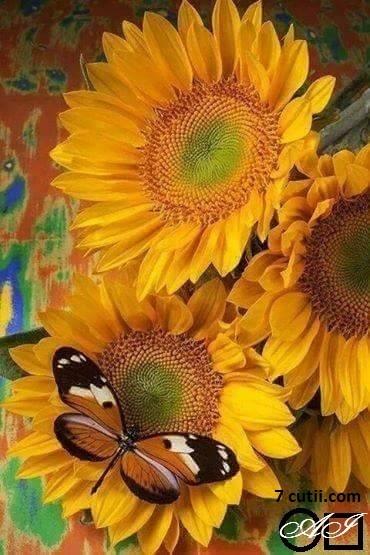 Goblen de diamante - Floarea soarelui si fluturele: Dimensiuni si tip - 36x24 cm Margele Patrate