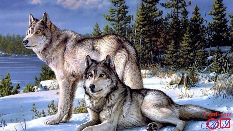 Goblen de diamante - Doi lupi in zapada: Dimensiuni si tip - 32x24 cm Margele Rotunde (Circulare)