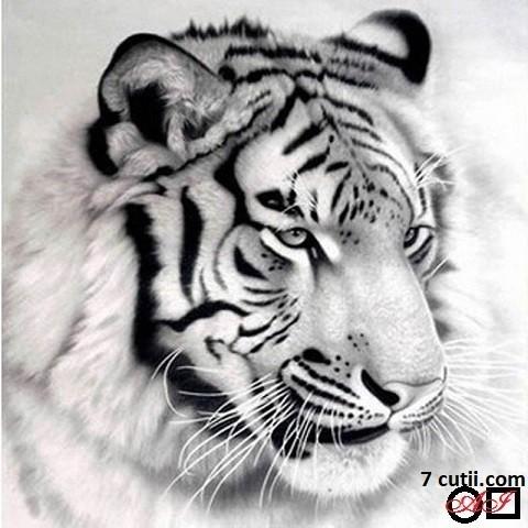 Goblen de diamante - Tigru in alb si negru: Dimensiuni si tip - 40x40 cm Margele Patrate