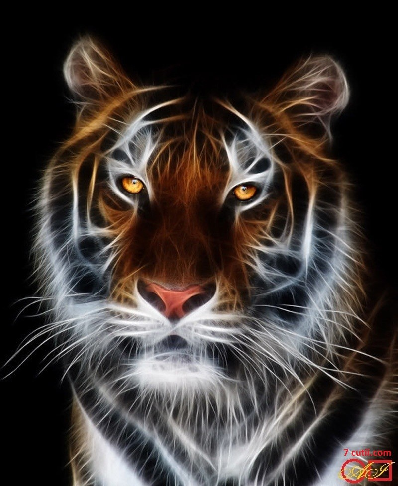 Goblen de diamante - Tigrul magnific: Dimensiuni si tip - 28x23 cm Margele Patrate