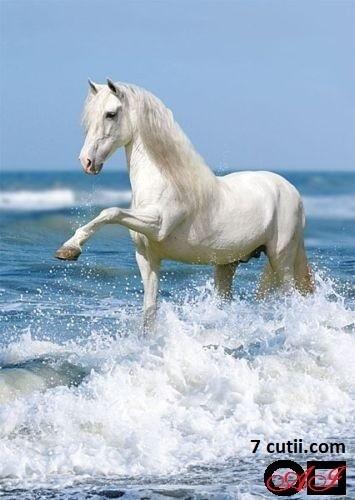 Goblen de diamante - Calul alb printre valuri: Dimensiuni si tip - 42x30 cm Margele Patrate