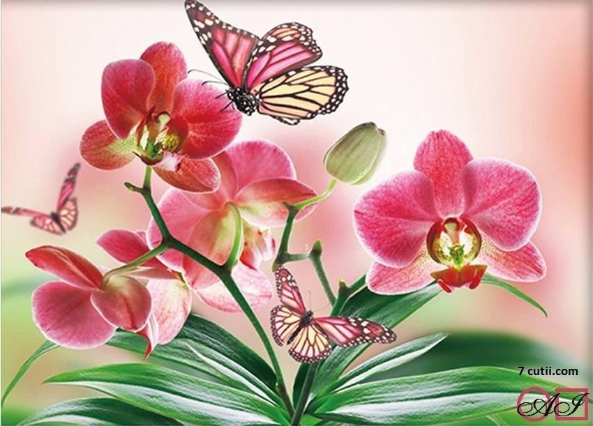 Goblen de diamante - Orchidei si fluturi: Dimensiuni si tip - 28x21 cm Margele Patrate