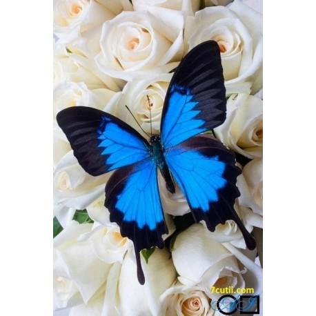 Goblen de diamante - Fluture albastru