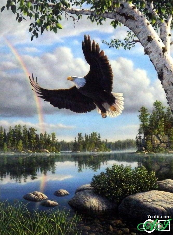 Goblen de diamante - Pamantul vulturului: Dimensiuni si tip - Margele Rotunde  33x30 cm.