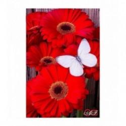 Pictura pe numere - Gerberi rosii si fluture alb