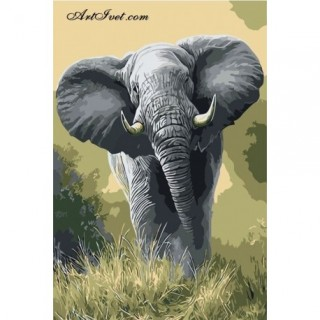 Pictura pe numere - Elefant