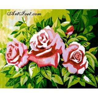 Pictura pe numere - Trandafirii verii