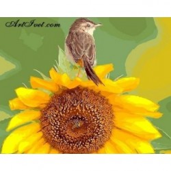 Pictura pe numere - Vrabiuta mica pe floarea soarelui
