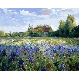 Pictura pe numere - Camp cu irisi albastri
